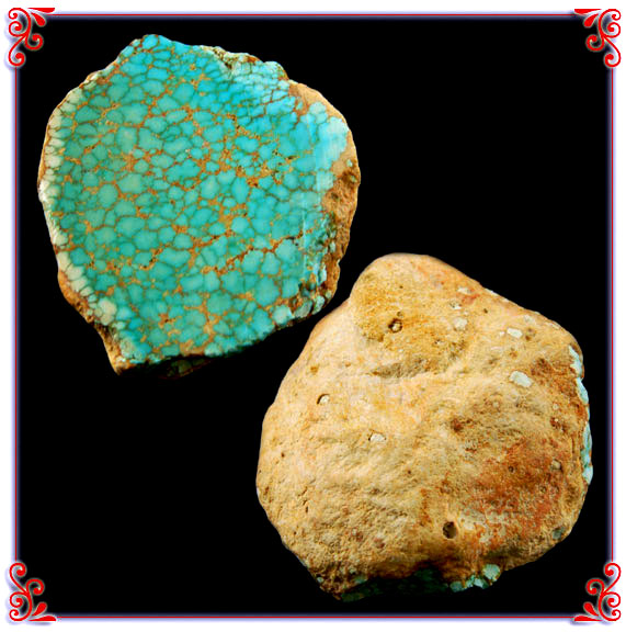 Number 8 Spiderweb Turquoise Fossil Clam