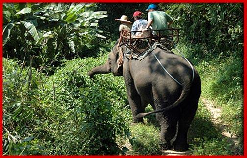 Chiang Mai Elephant Tours