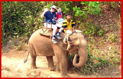 Hill Country Elephant Tours